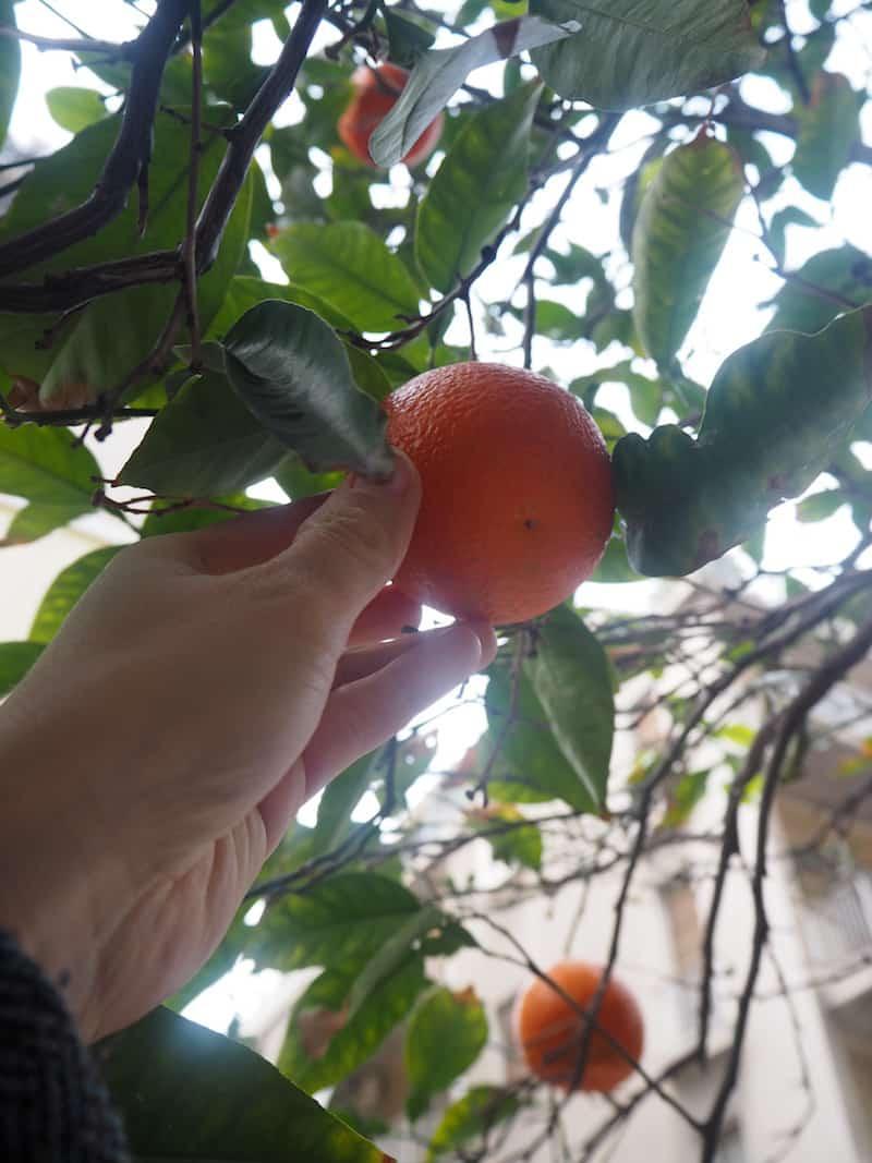 """Im siebten Himmel fühle ich mich sowieso, seit ich im """"Winter"""" (Mitte Februar) reifes Obst an den Bäumen entdecke ..."""