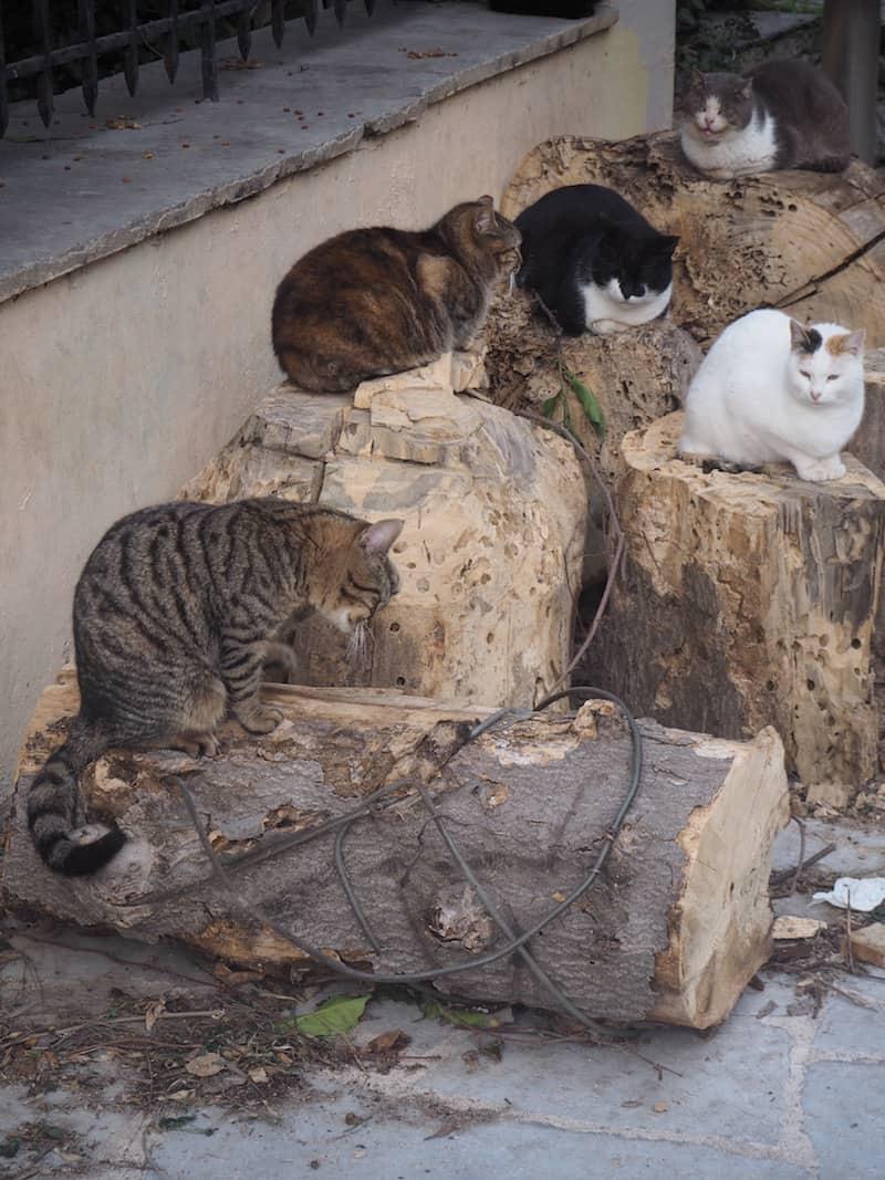 ... dicke Straßenkatzen in völliger Genügsamkeit an wahrlich jeder Ecke entdecke ...