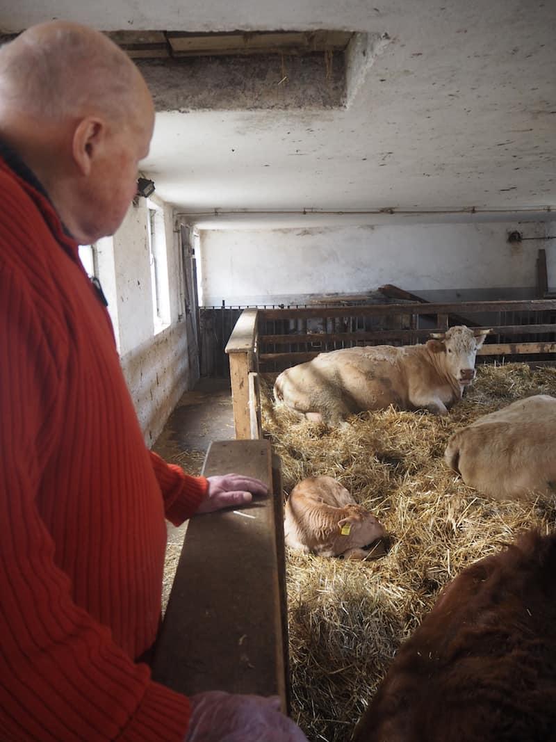 Der Opa, die Kühe und das Kalb. Schön.
