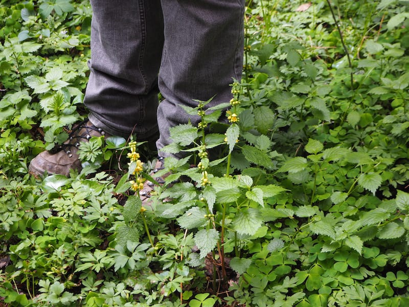 ... Stefan, our herbal nature guide, is well rooted in his homeland, experience and knowledge of the local plants ...