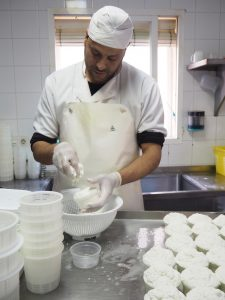 ... producing fresh cottage cheese from goat's milk every day ...