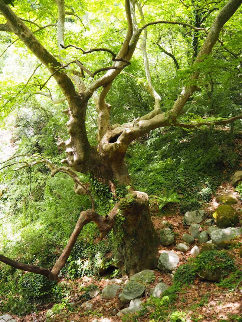 ... toll, die Naturlandschaften rund um diese spektakulären Felsformationen ...