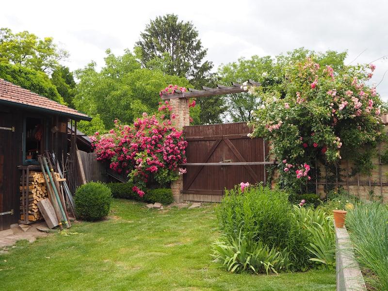 Aus diesem Garten des typischen Weinviertler Hakenhofes ...
