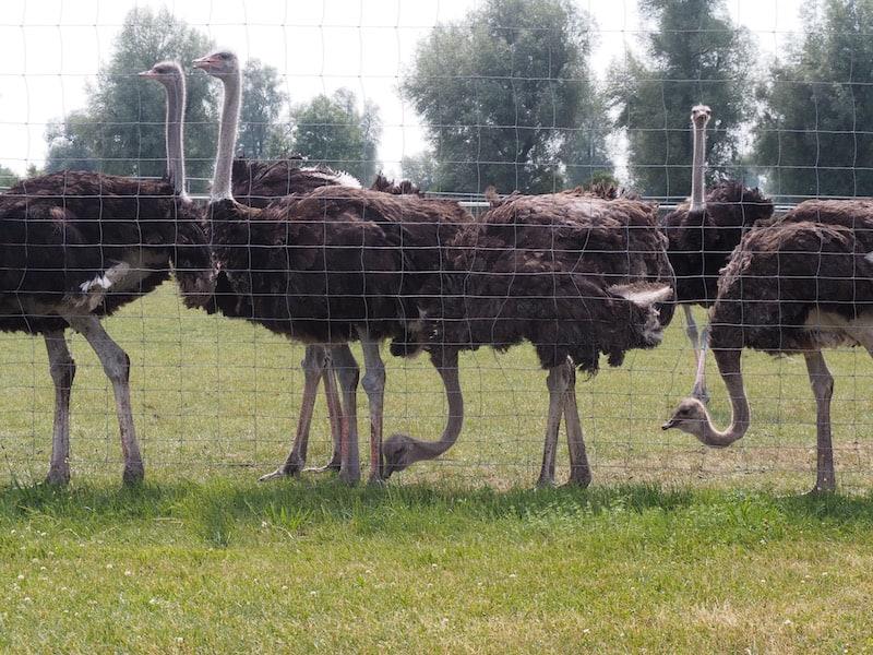 der mit Abstand größten in ganz Deutschland mit über 800 Tieren!