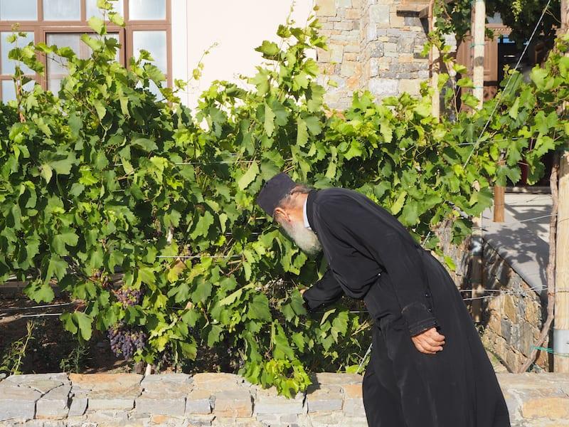 ... und bei der Überprüfung der Trauben des Klosters mit dem Abt höchstpersönlich ...