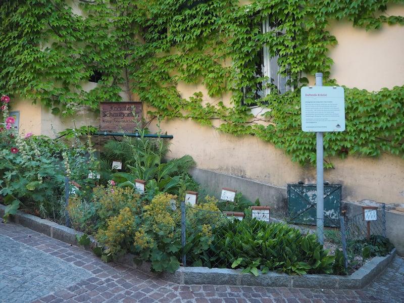 Auch die Stadt Scheibbs selbst bietet getreu ihrem Naturerlebnis-Motto, diesen hübsch gestalteten Kräuter-Schaugarten mitten in der Altstadt ...