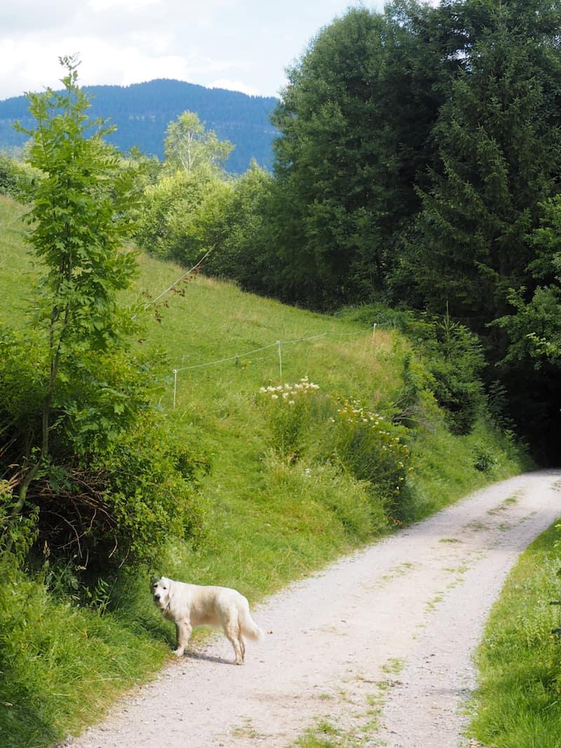 ... den Weg entlang ...