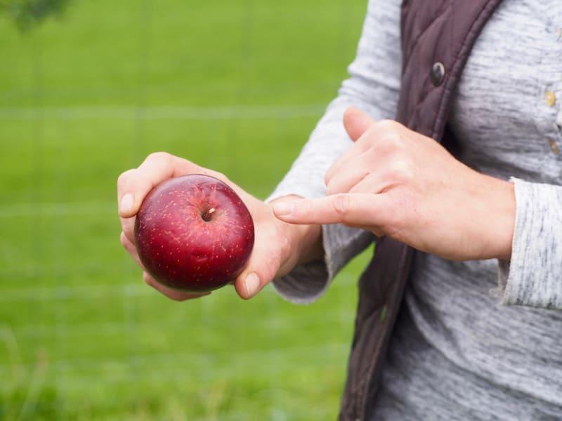 ... hat Mostbäuerin Susanne Weissensteiner auch schon die richtigen Apfelsorten für den Herbst parat ...