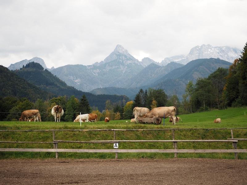 ... sowie die umliegende Landschaft mit Pferdekoppel, Rinderweiden und Wiesen zum Verweil ein.