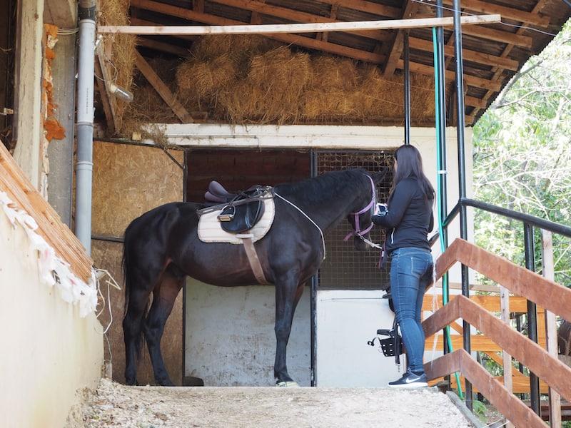... während Christina und ich einiges an Erfahrung im Umgang mit Pferden haben, ist es für Maria tatsächlich die erste Stunde hoch zu Pferde! Doch keine Sorge, Dragan stellt sich mühelos auf alle Niveaus ein ...