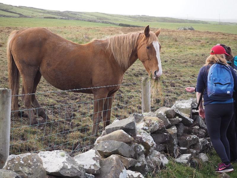 ... über das Privatland von Pat's Familie, seinen Pferden Guinness und Whisky ...