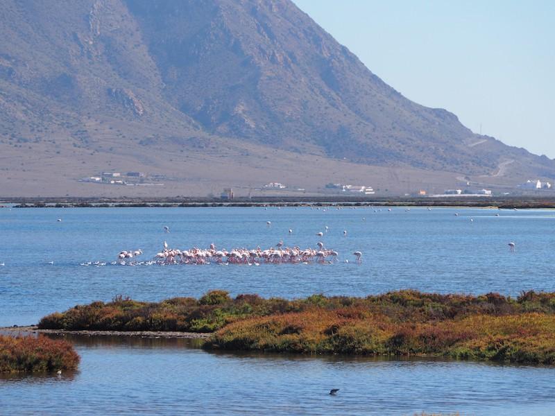 ... hier am Fuße des Naturpark Cabo de Gata nisten beispielsweise ganze Kolonien von seltenen Flamingos ...
