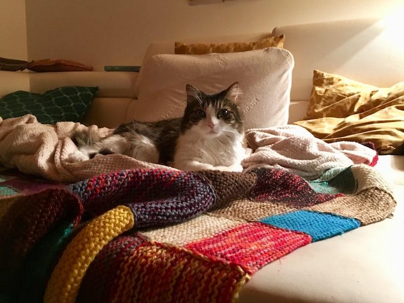 ... oder es sich einfach nur auf der Couch mit ihrer königlichen Katze Anouk bequem zu machen ...