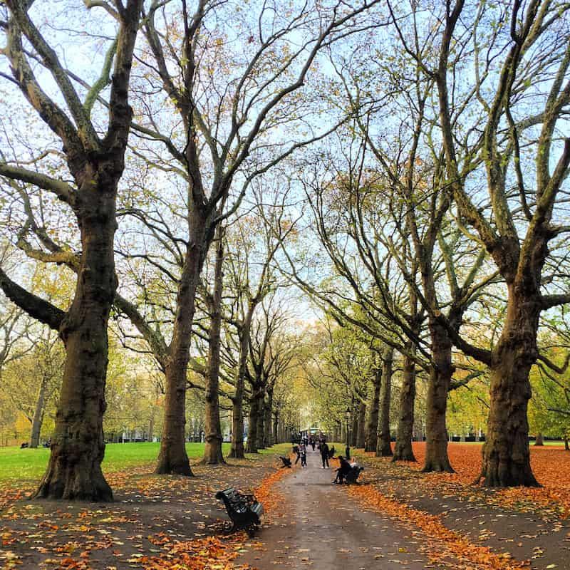 """... bzw. noch fast wichtiger finde ich, die wunderschönen Parks der Innenstadt abzugehen und sich hier von Ruhe & Gelassenheit """"solcher Bilder"""" treiben zu lassen: Blick in eine Ahorn-Baumallee im wunderschönen Londoner Green Park ..."""
