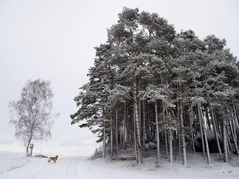 ... auch die Landschaft ringsum, immer wieder ein Traum in Weiß ...