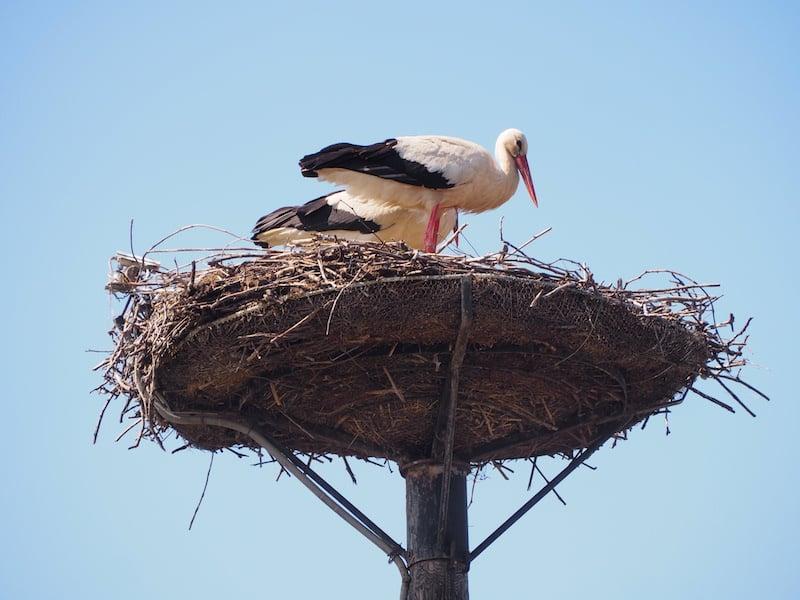 ... hat dieses charmante Paar sein Nest gebaut!