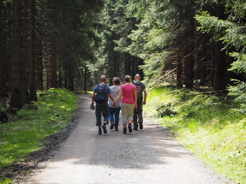 ... hinein in die frühlingshafte Waldlandschaft ...