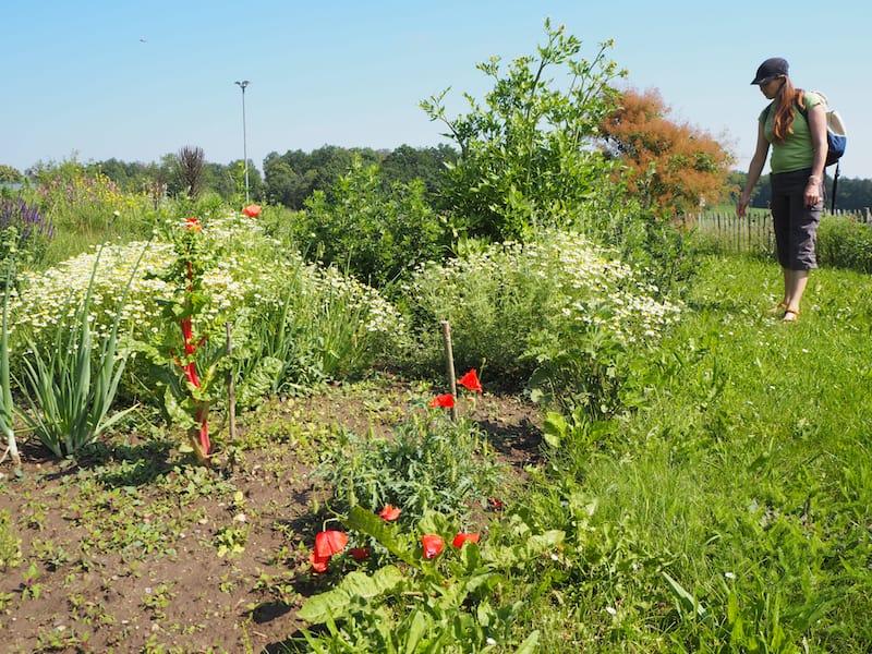 ... sondern bietet auch einen eigenen Blumen- und Kräutergarten für Besucher ...