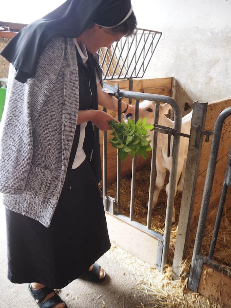Schwester Monika nimmt uns mit zur jungen Bauernfamilie, die gleich neben dem Kloster die Milch- und Viehwirtschaft betreibt ...