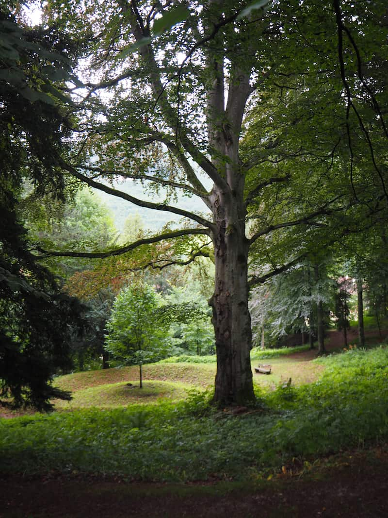 """Naturgenuss und Erholung im Stiftspark Lilienfeld: Dieser Baum hier mit seinem kleinen """"Baumkreis"""" ist mein Lieblingsort im Park geworden!"""