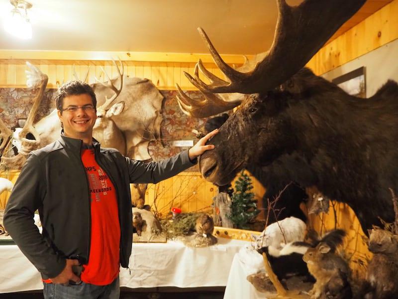 Elchgeweih statt Bär im Wald: Überall in Québec stoßen wir auf die stolzen Spuren der Jagd ...