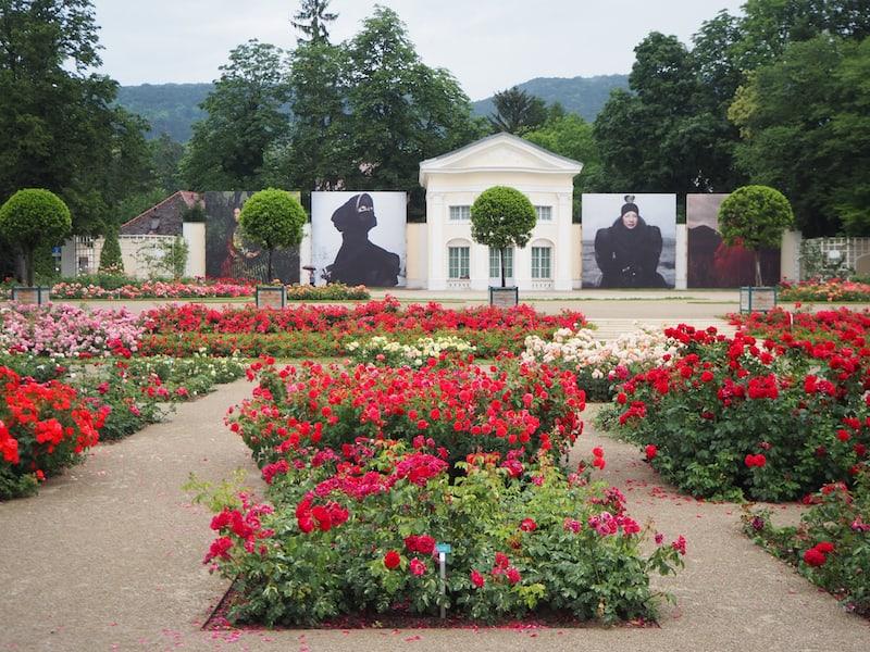 """Vorbei an den ersten großformatigen Bildern des Fotofestivals """"La Gacilly"""", welches vier verschiedene Frauen aus unterschiedlichsten Kulturen im Rosarium des Doblhoffparks in Baden zeigt ..."""
