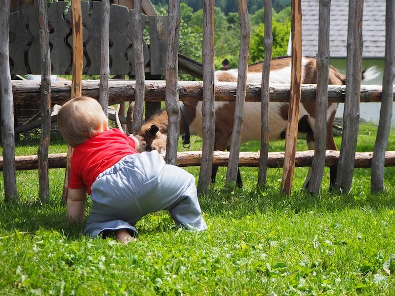 ... draußen gebe auch weiterhin ICH Gas: Am Zaun begrüße ich Lotte die kleine Ziegentochter ...