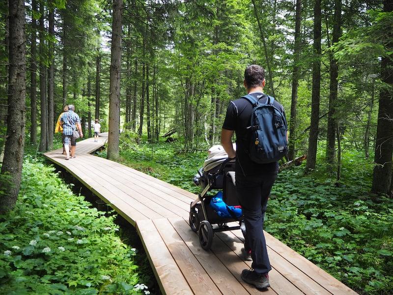 ... kurze Zeit später spazieren wird durch das nahe gelegene Wald- und Wiesen-Moor ...