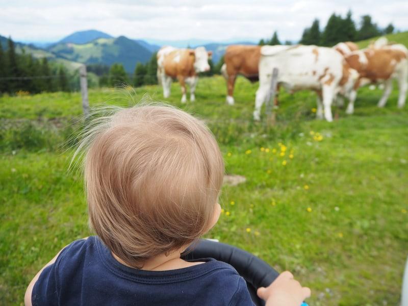 """Willkommen im Steirischen Almenland (""""Wow, Mama, Kühe, so etwas habe ich ja noch nie gesehen ...!"""") ..."""