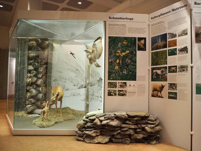 Gut gefällt mir weiters die Ausgestaltung des naturkundlichen Teils des Museums. Hier wäre ich gerne schon als Schüler