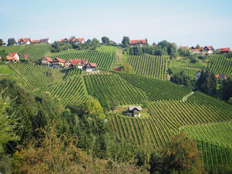Blick auf die Weingärten von Hochgrail im Schilcherland Weststeiermark: Ein zauberhafter Anblick zu jeder Jahreszeit, besonders aber jetzt im Herbst.