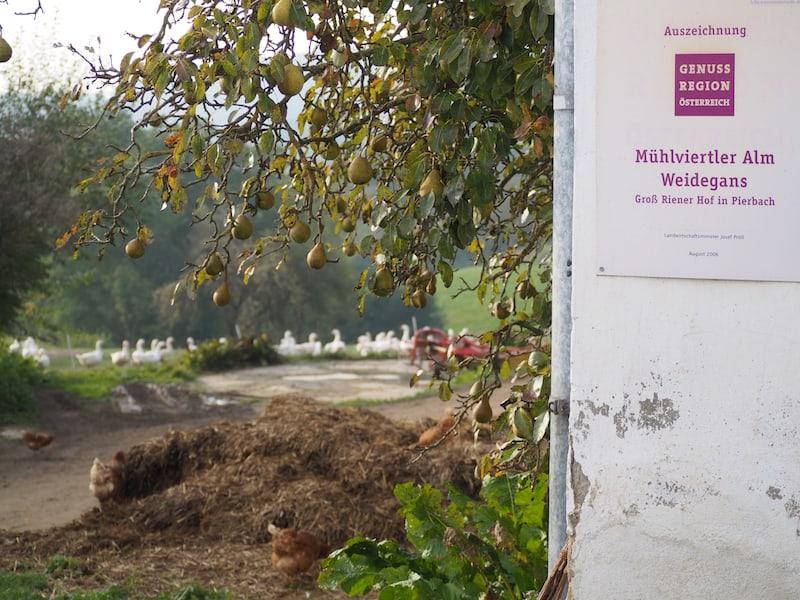 ... hier am Hof in der kleinen Gemeinde Pierbach im Mühlviertel.