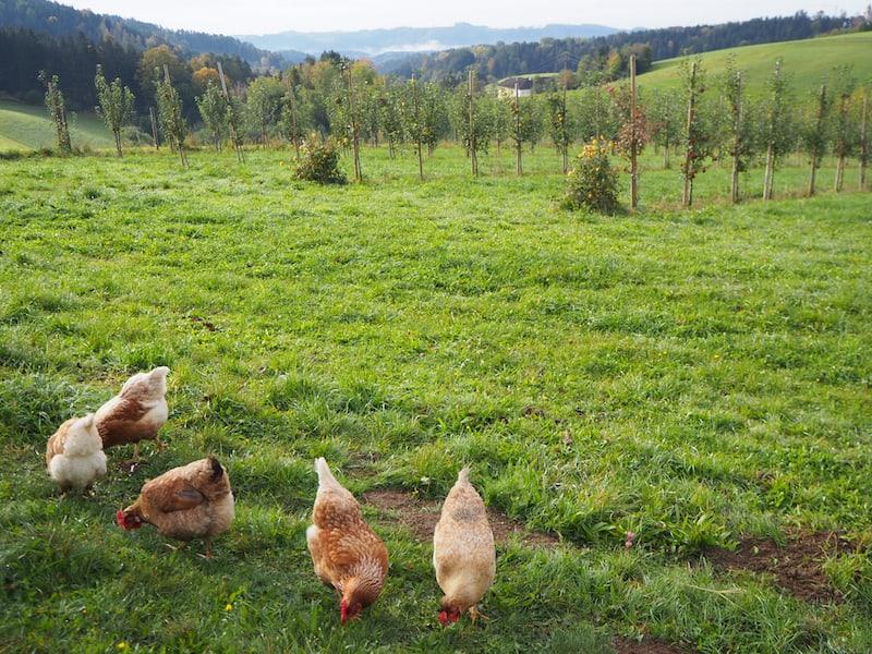 Landschaftsgruß bei der Ankunft am Hof der Familie Eder ...