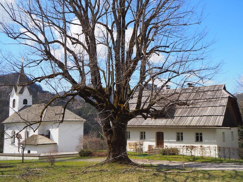 Apropos Bäume und Erzählen: Diese Linde ist viele Hundert Jahre alt und ein nachgewiesen stärkerer Kraftplatz als die dahinterliegende Trögerner Kirche. Stark, welche Kräfte hier wirken.