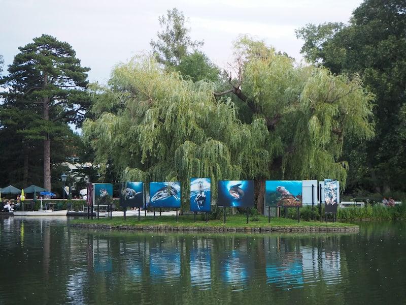 """Im Doblhoff Park schließlich gibt es auch heuer wieder eine """"Schwimmende Galerie"""": Passend zum Thema werden am Doblhoff Teich atemberaubende Unterwasserbilder gezeigt."""