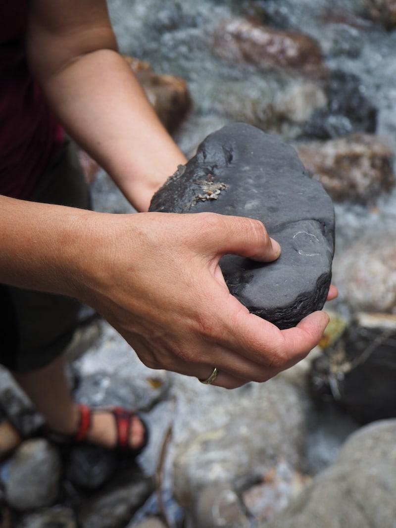 ... unter anderem erklärt sie ganz genau, wie wir die zahlreichen Fossilien finden ...