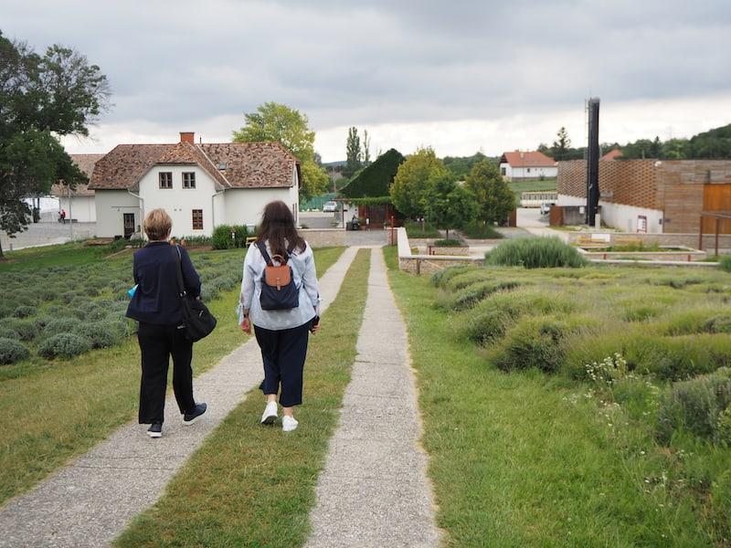 Spaziergang zu Lavendel und Duftmuseum ...