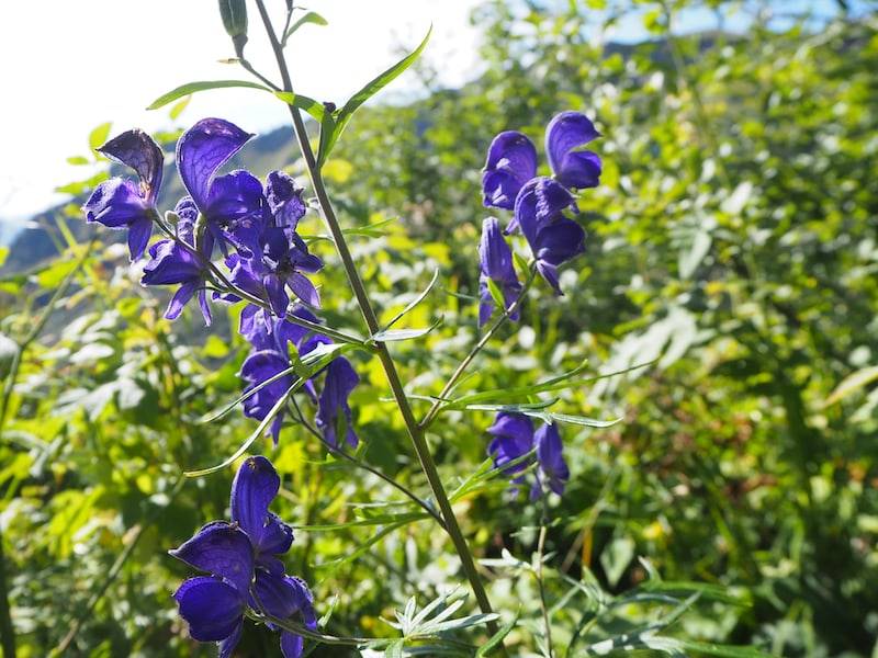 ... schnell wird klar, dass es für die Bestimmung zahlreicher Pflanzenarten tatsächlich einen (alpinen) Experten wie Günther braucht ...